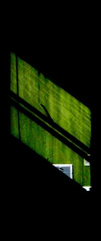 """""""Green and Black"""" 2009 (Copyright Paul Loney)"""