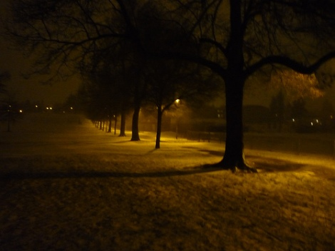 More Trees in Winter (Copyright by Paul Loney)